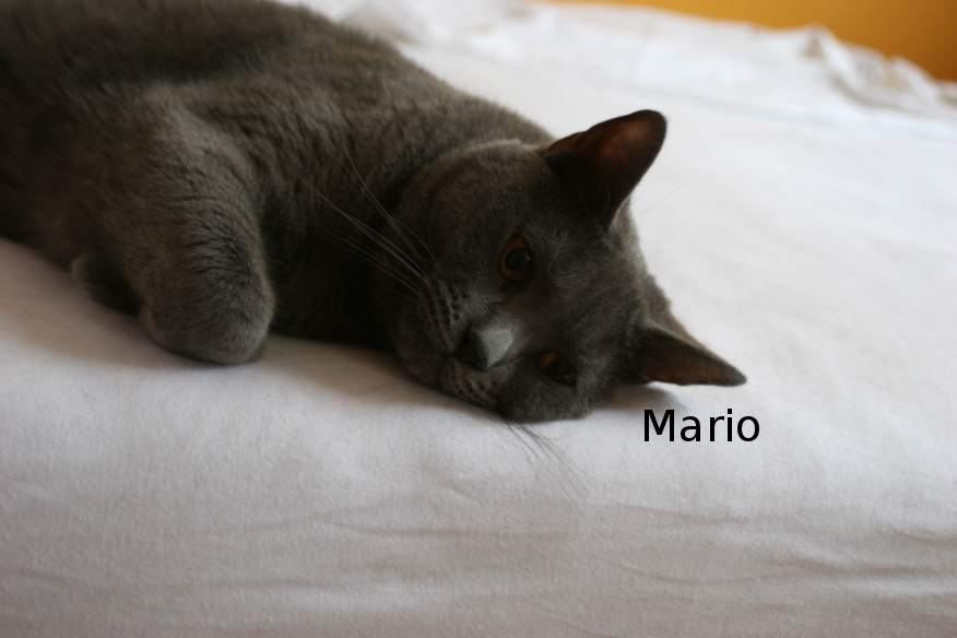 "IMG_3919_Mario.JPG"""