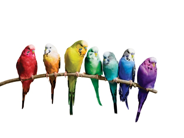 diversity_nature.jpg