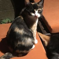 A Mini cica
