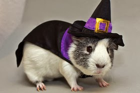 IG-21-01-2014-America-Costumes-For-Pets2.jpg