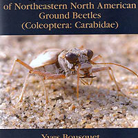 Yves Bousquet (2010): Illustrated Identification Guide to Adults and Larvae of Northeasthern North American Ground Beetles (Coleoptera: Carabidae).