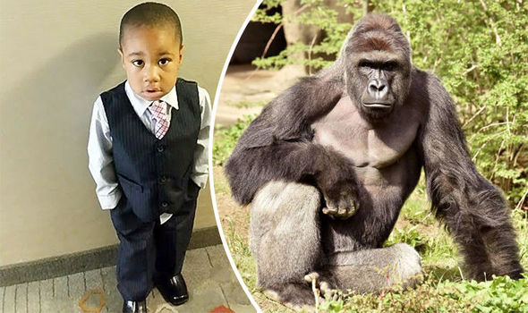 gorilla-675632.jpg