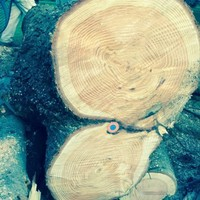 Golflabda a kivágott fában