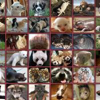 Mennyire érzik a fájdalmat az állatok?