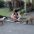 Állatmenhelyt nyitott egy 9 éves fiú a Fülöp-szigeteken