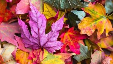 Élj színesen!