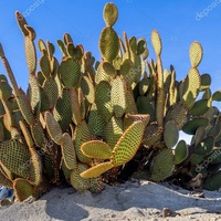 Az érdi Kaktuszkör különleges bemutatója a Szepesben