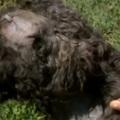 BRUTÁLIS ÁLLATKÍNZÁS TÁRNOKON:  45 centis nyílvesszővel lőtték fejbe a kutyát (videó)