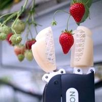 NEM KELL EMBER! Ezt a robotot lehet Érden is eperszedésre használni! (Nézze meg VIDEÓN!)