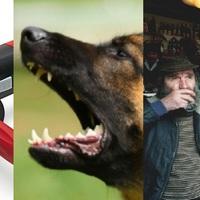 Érdi anzix avagy flex, kutya, kocsma, hogy mindenki élvezze!
