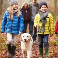 ÉRDEMES LENNE ÉRDEN IS BEVEZETNI! Kötelező tanfolyamra kell menni egyes kutyatulajdonosoknak