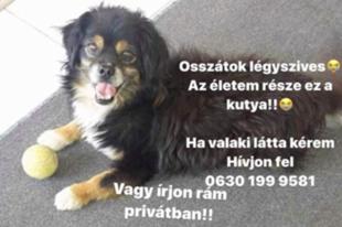 Egy érdi kisfiú sírva keresi elveszett kutyusát, segítsenek megkeresni!