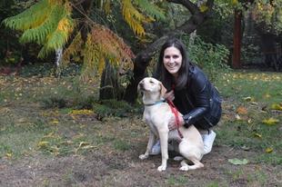 Jó hír az érdi elkóborolt kutyák gazdijainak