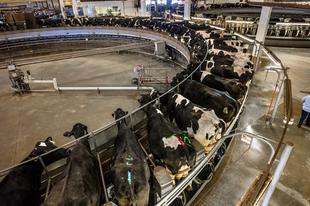 MOST AKKOR VÉGE A HAGYOMÁNYOS TEJNEK? Vagy csupán úri huncutság a többi tej?