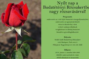 LÁTTA MÁR?! Nyílt nap szombaton a Budatétényi Rózsakertben, ha tetszenek, haza is viheti!