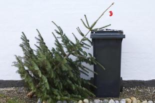 Ha nem használja fel otthon a karácsonyfáját!