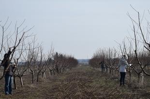MEGÚJUL AZ ÉRDI ELVIRA MAJOR-GÉNBANKJA: Tovább fejlődik a terület