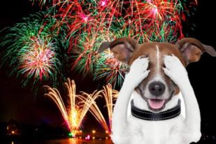 A kutyusokkal, lovakkal vigyázzon az esti tűzijáték alatt