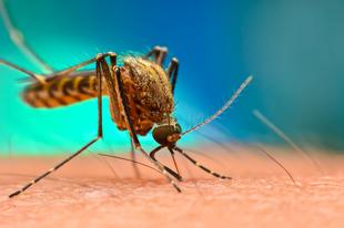 MEG VAGYUNK MENTVE ÉRDEN IS: Ultra hatékony méregmentes módszer a szúnyogok ellen