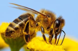 Vigyázzanak a méhekkel és a darazsakkal a nyári szezonban is