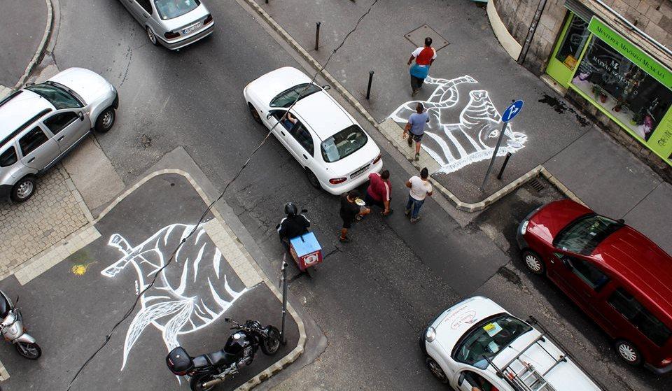 zebra-mkkp-fboldaluk.jpg