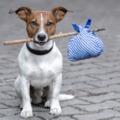 MOST INGYENESEN IVARTALANÍTJÁK A GYŐRI KÓBOR EBEKET! Központi kutya program indul