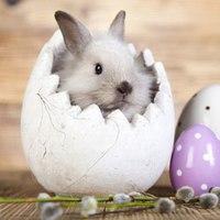 Mit hoz a nyuszi, vagy éppen mit visz el? 30 húsvéti babona vasárnapra és hétfőre!