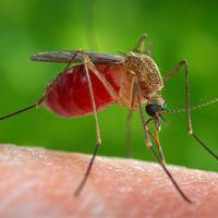 Adnak a szúnyogoknak