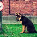 """Győrben is lehetne """"Kutyaszar köz"""" vagy utca?"""