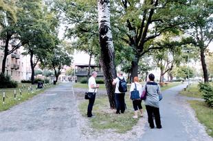 AZ ERDŐ LEGYEN VELÜNK! Addig szórakoznak, amíg Győrben alig lesznek fák és zöldterületek?