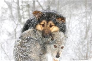 Ön mindent megtesz, a kemény hidegben, állatai védelmében Győrben is?