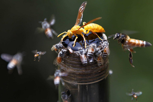 Itt a nyár, jönnek szembe a méhek és darazsak, nem mindegyik jópofa