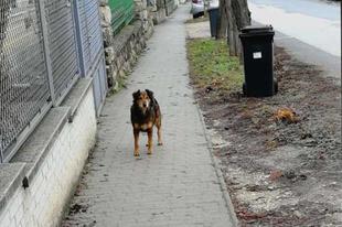 Ha még mindig keresi a kutyusát illetve talált egy ismeretlent, jelezze nekünk és közhírré tesszük!
