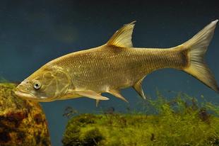 HOPPÁ! Nagyon izgalmas versenyben, na mi lett az év hala?
