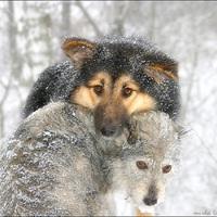 Ön mindent megtesz, a kemény hidegben, állatai védelmében Tatabányán is?