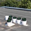 ÖT ÉVET KAPHAT A TATABÁNYAI MARISKÁS! Nagyot néztek a szomszédok, mire használta a társasház tetejét