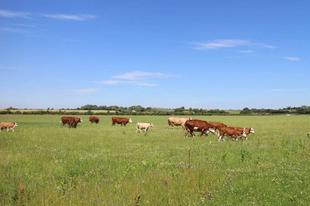 Önök szoktak Tatabányán bioélelmiszert venni? Inkább az öko a nyerő? Tudja, mi a különbség közöttük?