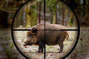 """Ne ijedjen meg, de egyelőre nincs más megoldás! A Főtéren talán nem fognak lőni a """"mesterlövészek"""", de indokolt esetben Tatabánya belterületén bárhol lelőhetik a vadállatokat!"""