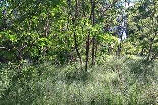 Dzsungel a Gál lakótelepi Spar mögött