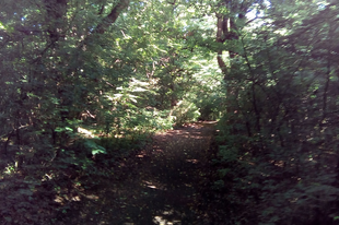 TATABÁNYA ABSZURDISZTÁN ZÁSZLÓSHAJÓJA MARAD? Erdőt irtunk egy futópályának?