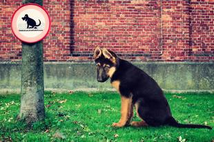 """Tatabányán is lehetne """"Kutyaszar köz"""" vagy utca?"""