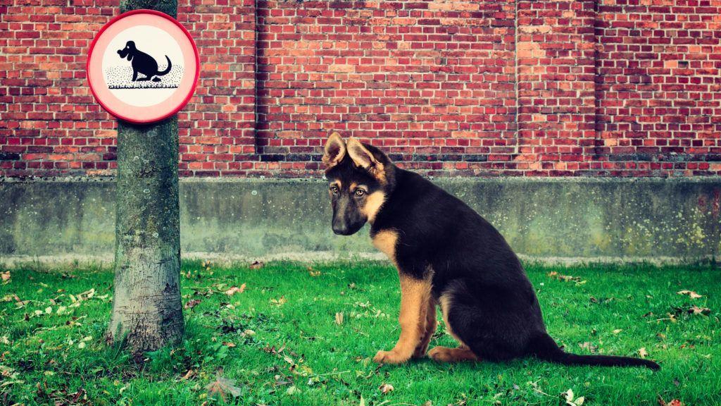 kutya_1.jpg