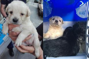 Állatkínzót fogtak a rendőrök Zuglóban
