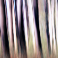 Zöld erdőben jártam...