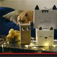 Bagoly, kutya és cica dobozok. Csomagolj! [videó]