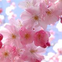 Tavaszváró
