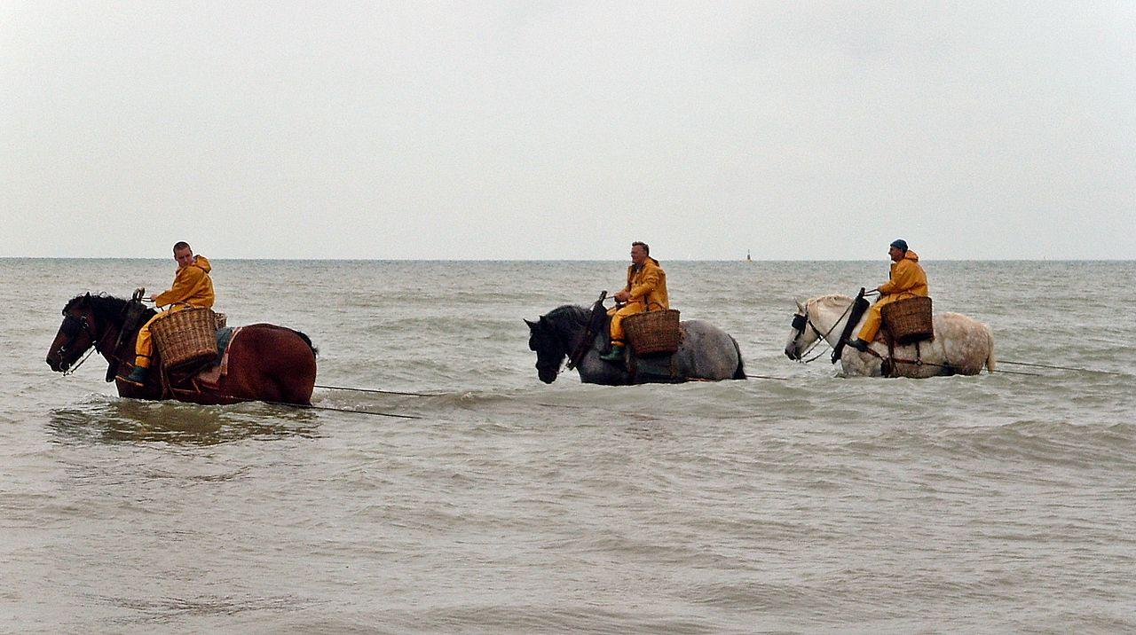 1280px-horseback_fishing_oostduinkerke.jpg