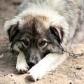 A kutyaudvar