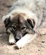 dog-1378174_180.jpg
