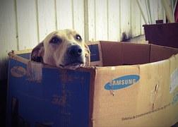 dog-660505_180.jpg